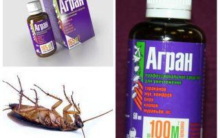 Ubat Agran untuk kecoa
