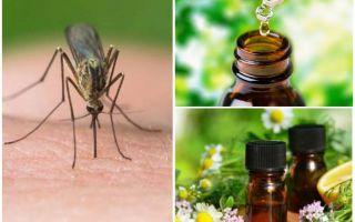 Minyak penting dari nyamuk