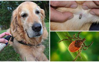 Sprays for dogs against ticks and fleas