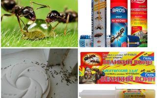 Bagaimana untuk memusnahkan semut dan semut