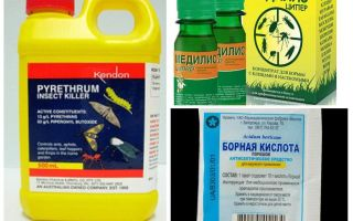 Ubat-ubatan profesional untuk kecoa