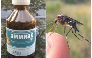 Ammonia cecair dari nyamuk