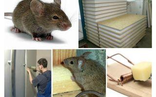Adakah tikus menggigit panel fesyen