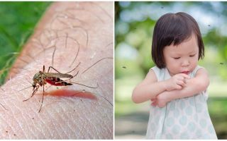 Berapa hari gigitan nyamuk pergi?
