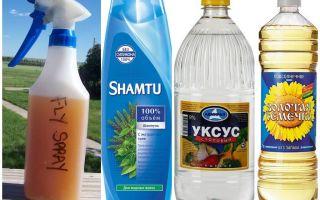 Do-it-yourself nyamuk penghalau syampu + cuka