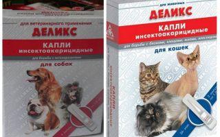 Titik loak yang lazat untuk kucing dan anjing