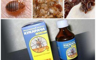 Cucaracha ubat untuk bedbugs