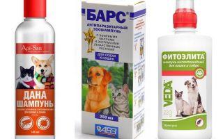 Syampu bulu yang paling popular dan berkesan untuk anjing