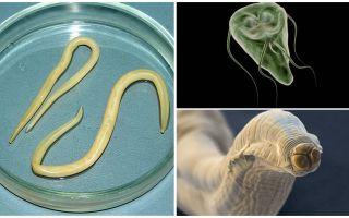 Perbandingan Giardia dan Worms