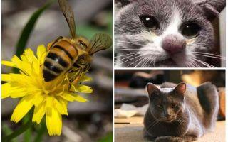 Apa yang perlu dilakukan jika kucing digigit oleh lebah