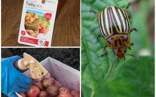 Bila dan bagaimana untuk menyemburkan dan memproses kentang dari kumbang kentang Colorado