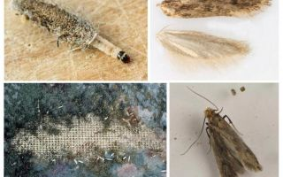Apa yang perlu dilakukan jika tahi lalat bermula dalam kot bulu