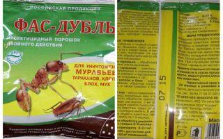 Bermakna Fas Double dan Super Fas dari bedbugs