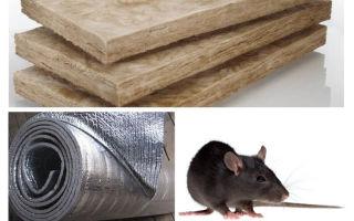 Apakah jenis penebat yang tidak makan tikus dan tikus