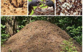 Kehidupan semut di semut