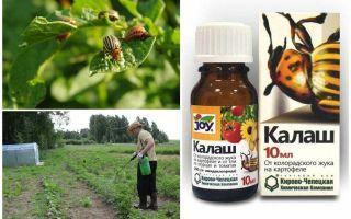 Berarti Kalash dari kumbang kentang Colorado