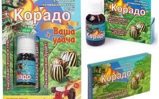 Arahan untuk penggunaan Corado dari kumbang kentang Colorado