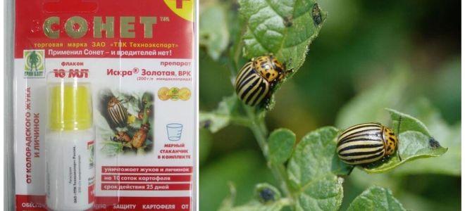 Ubat untuk kumbang Sonnet kumbang Colorado