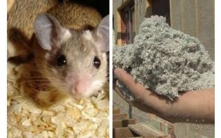 Apakah jenis penebat yang tidak makan tikus