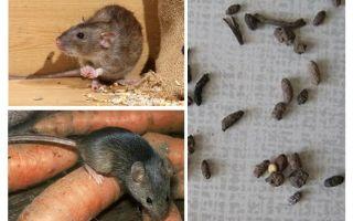 Bagaimana untuk menangani tikus di rumah peribadi