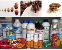 Mengkaji semula ubat-ubatan yang paling berkesan untuk pepijat domestik