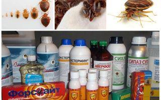 Racun untuk bedbugs di rumah