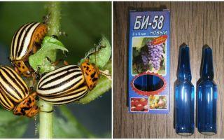 Bermakna Bi 58 terhadap kumbang kentang Colorado