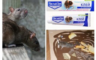 Clay Clean House dari Rodents and Insects