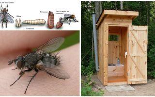 Bagaimana untuk menghilangkan lalat di dalam tandas di jalan