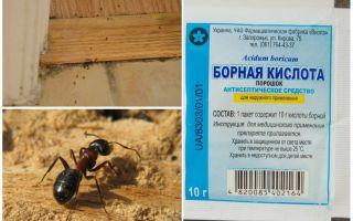 Bagaimana untuk menghilangkan semut dari rumah kayu