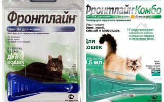 Titik sempit Frontline untuk kucing