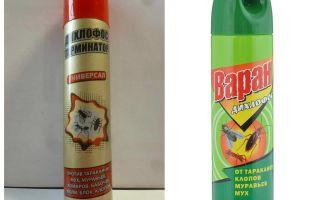 Dichlorphos daripada bedbugs