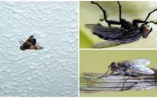 Apabila seekor lalat duduk dan berpaut ke siling