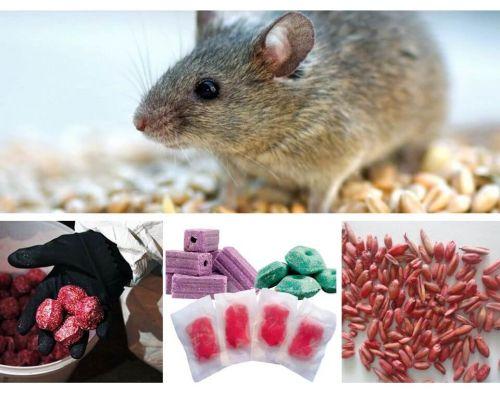 Racun untuk tikus dan tikus