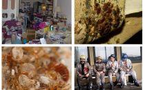 Di mana bedbugs datang dari dalam apartmen dan bagaimana untuk menghilangkan
