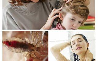 Pencegahan pediculosis dan typhus