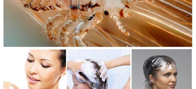 Syampu Pediculosis untuk kanak-kanak dan orang dewasa