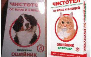 Kotak harimau celandine untuk kucing dan anjing