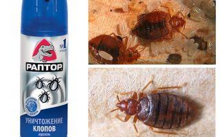 Bermakna Raptor dari bedbugs