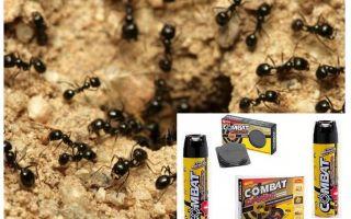 Pemulihan Pertarungan Semut