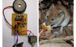 Tikus dan tikus replasik ultrasonik dengan tangan mereka sendiri