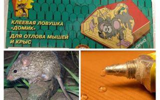 Lem dari tikus