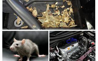Bagaimana untuk mendapatkan tikus dari kereta