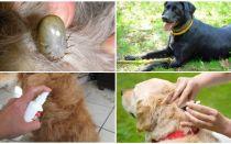 Ubat terbaik untuk anjing dari kutu dan kutu