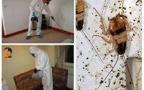 Pemusnahan lipas di apartmen