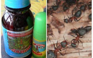 Bermakna penduduk Semula musim panas dari semut