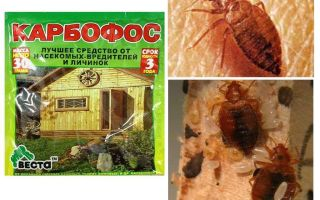 Bermaksud Karbofos dari bedbugs