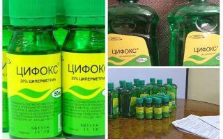 Cyclox ubat untuk bedbugs