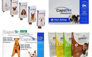 Tablet untuk kutu dan kutu untuk anjing
