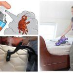 Kaedah menangani bedbugs